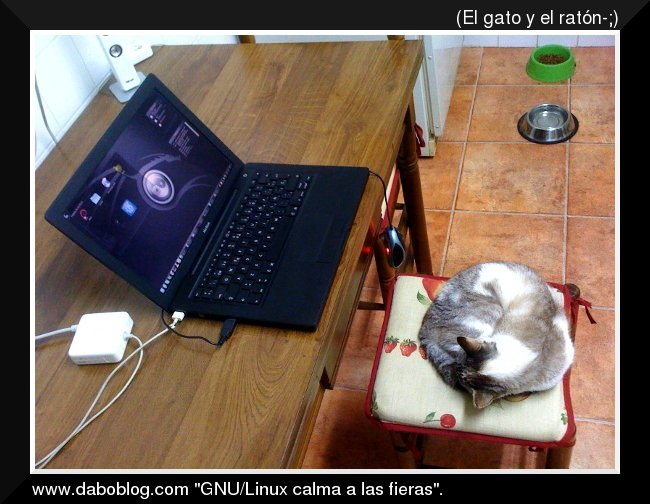 debian_dabo_cat